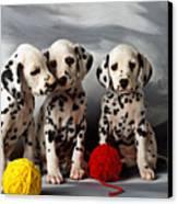 Three Dalmatian Puppies  Canvas Print by Garry Gay
