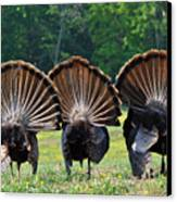 Three Fans Canvas Print by Todd Hostetter