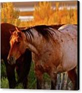 Three Horses Of A Suspicious Corral Canvas Print