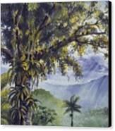 Through The Canopy Canvas Print