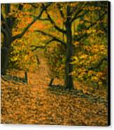 Through The Fallen Leaves Canvas Print