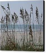 Thru The Sea Oats Canvas Print