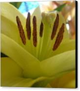 Tiger Lily Canvas Print by Patricia M Shanahan