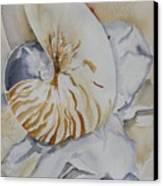 Tiger Nautilus Canvas Print