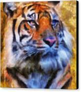 Tiger Portrait Canvas Print by Jai Johnson
