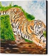 Tiger Stretching Canvas Print