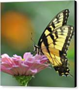Tiger Swallowtail Butterfly Canvas Print by Bill Cannon