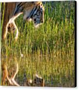 Tiger Tiger Burning Bright Canvas Print by Melody Watson