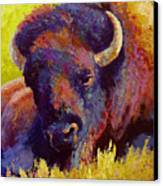 Timeless Spirit - Bison Canvas Print by Marion Rose