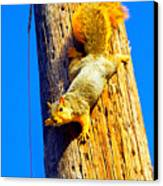 To Squirrels And To Me Canvas Print by Guy Ricketts