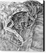 Togetherness - Greyhound Dog Art Print Canvas Print by Kelli Swan