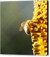 Too Bee Or Not To Be Canvas Print