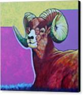 Top Heavy Big Horn Canvas Print
