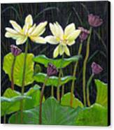 Touching Lotus Blooms Canvas Print