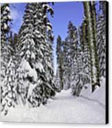Trail Through Trees Canvas Print by Garry Gay