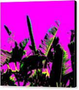 Transgenesis Canvas Print by Eikoni Images