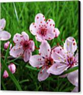 Tree Blossoms 4 Spring Flowers Art Prints Giclee Flower Blossoms Canvas Print