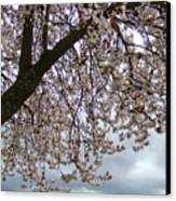 Tree Blossoms Landscape 11 Spring Blossoms Art Prints Giclee Sky Storm Clouds Canvas Print