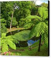 Tree Ferns Canvas Print by Gaspar Avila