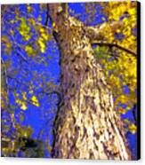 Tree In Motion Canvas Print