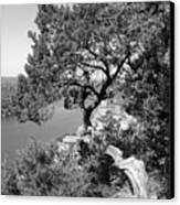 Tree On Mount Bonnell Canvas Print