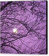 Tree Silhouettes With Rising Moon In Cades Cove, Great Smoky Mountains National Park, Tennessee, Usa Canvas Print