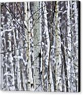 Tree Trunks Covered With Snow In Winter Canvas Print by Elena Elisseeva