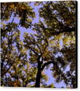 Trees Conversing Canvas Print by Deborah  Crew-Johnson