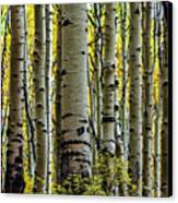 Trees For The Forest Canvas Print