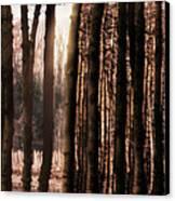 Trees Gathering Canvas Print