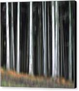 Trees Trunks Canvas Print