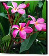 Tres Floras Canvas Print