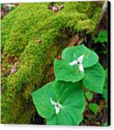 Trillium Pair By Mossy Log Canvas Print