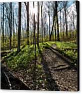Trillium Trail Canvas Print
