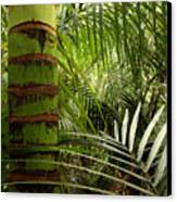 Tropical Forest Jungle Canvas Print by Les Cunliffe