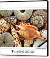 Tropical Shells... Greeting Card Canvas Print by Kaye Menner