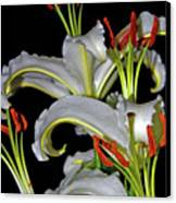 True Lilies Canvas Print by Andy Za