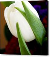 Tulip Arrangement 4 Canvas Print