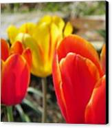 Tulip Celebration Canvas Print by Karen Wiles