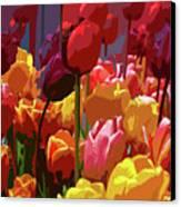 Tulip Confusion Canvas Print