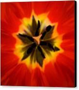 Tulip Explosion Kaleidoscope Canvas Print