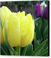 Tulip Flowers Artwork Tulips Art Prints 10 Floral Art Gardens Baslee Troutman Canvas Print