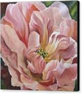 Tulip In Pink Canvas Print