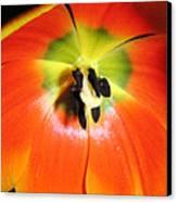 Tulips - An Inside Look Canvas Print