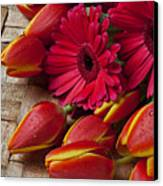 Tulips And Red Daisies  Canvas Print