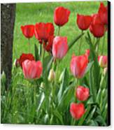 Tulips Flowers Art Prints Spring Tulip Flower Artwork Nature Art Canvas Print