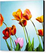 Tulips Canvas Print by Trevor Wintle