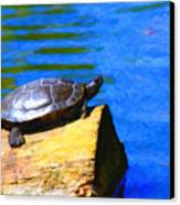 Turtle Basking In The Sun Canvas Print by Wingsdomain Art and Photography