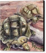 Turtle Friends Canvas Print