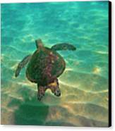 Turtle Sailing Over Sand Canvas Print by Bette Phelan